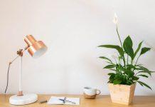 tanaman hias mini