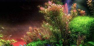 tanaman darat menjadi tanaman air