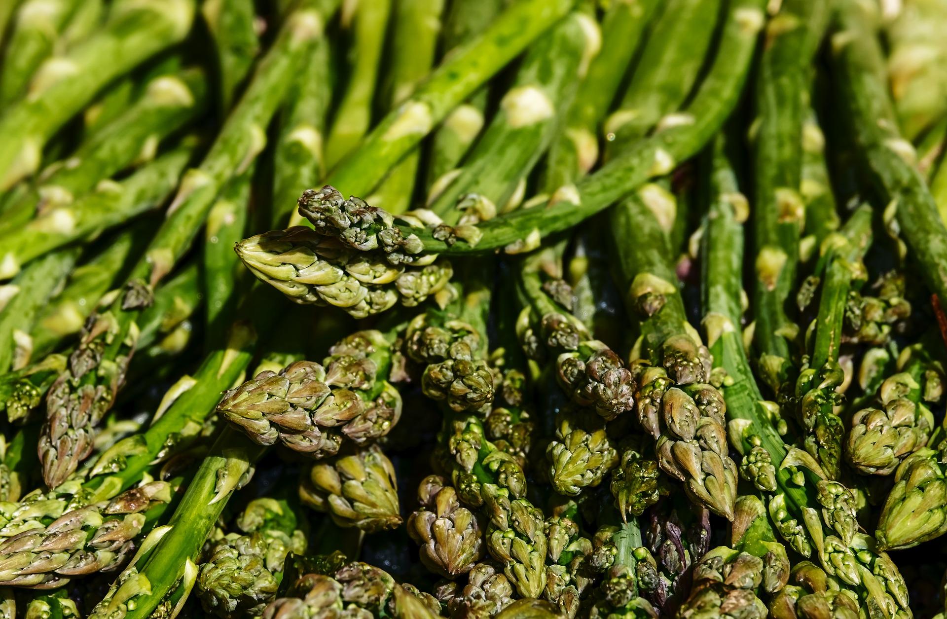 cara membudidayakan asparagus