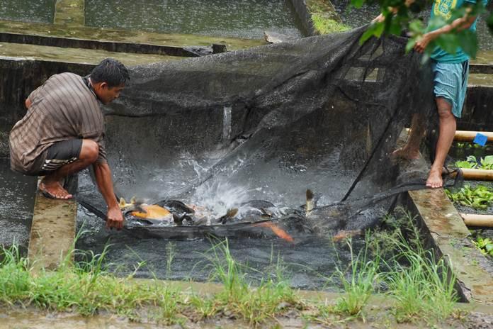 nutrisi penting untuk ikan