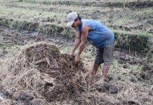 kesejahteraan petani