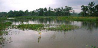 optimalisasi lahan rawa