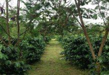naungan untuk tanaman budidaya