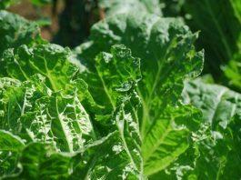 percantik pekarangan dengan tanaman sayur