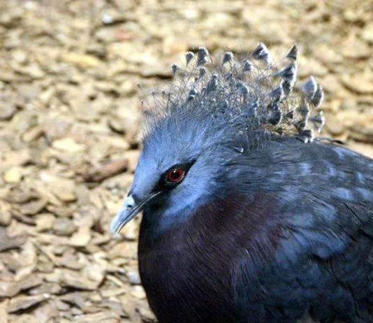 burung langka