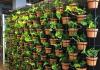 Merawat tanaman vertikal