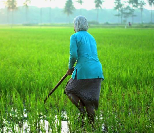 Artikel Berita Terbaru Terbaru Artikel Pertanian Terbaru Berita