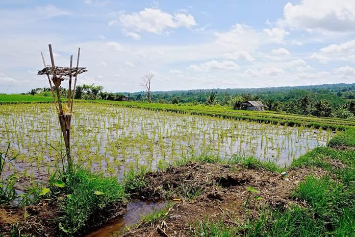 Agroekologi