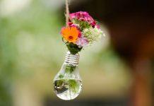 Berkebun tanaman hias