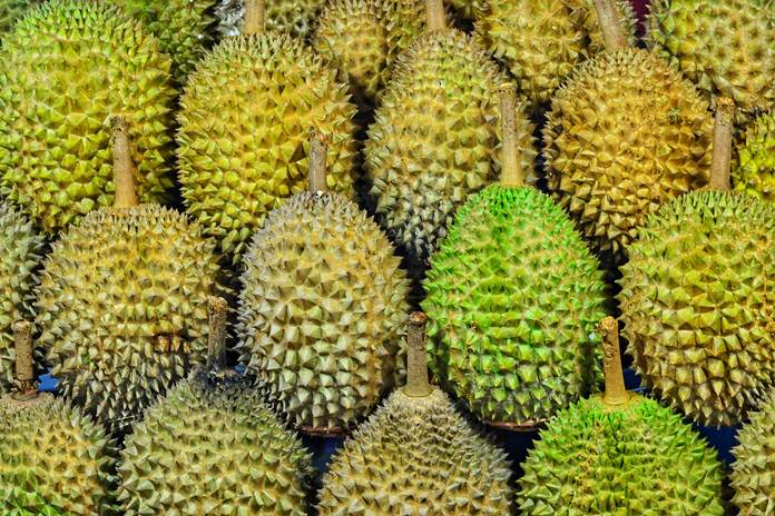 bisnis durian montong