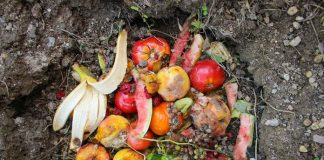 pupuk organik cair dari buah busuk