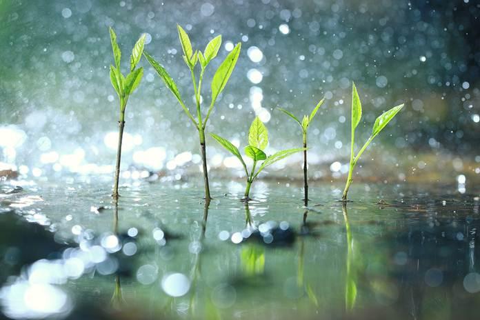 Gunakan Air Hujan untuk Kebutuhan Air Tanaman Anda - Pertanianku