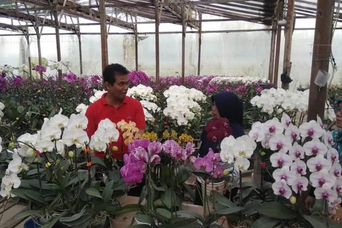 izin ekspor tanaman hias
