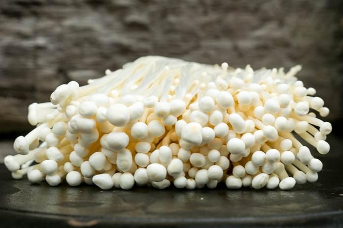 khasiat jamur enoki