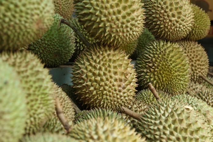 penanganan pascapanen buah durian