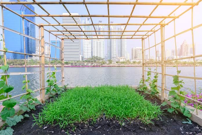 penerapan urban farming
