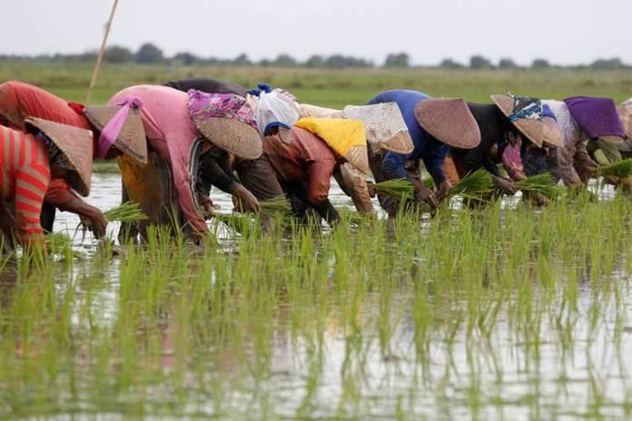 petani Indonesia