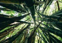 potensi bambu sebagai ladang bisnis