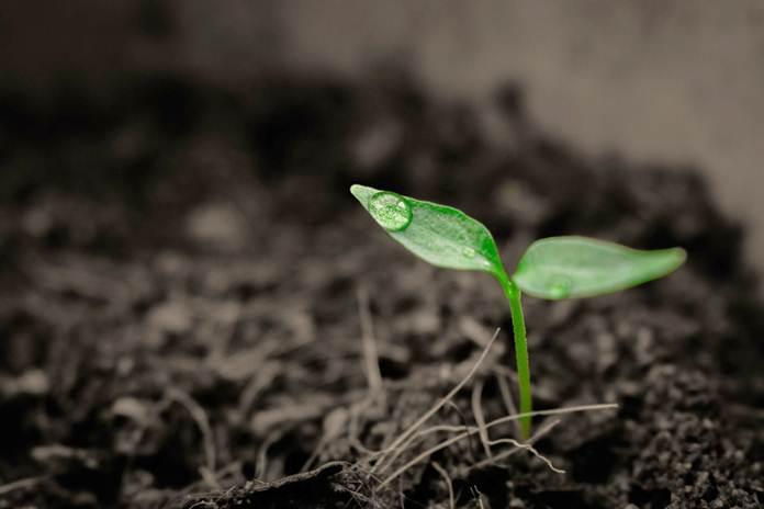 nitrogen pada tanah