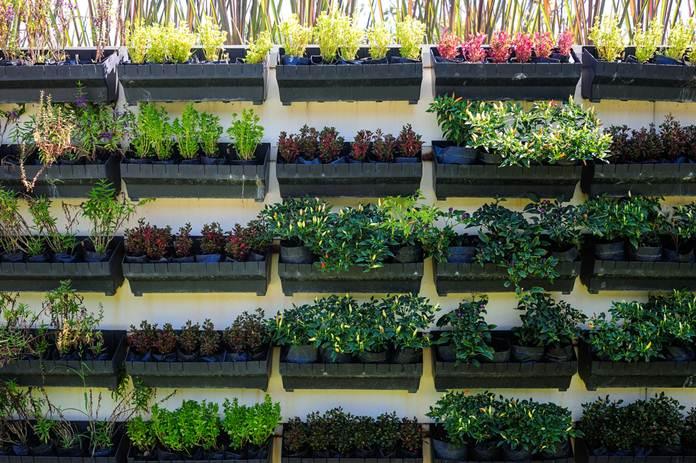 kebun sayuran mini
