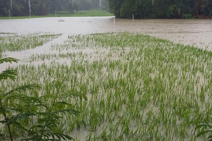 kerugian di bidang pertanian
