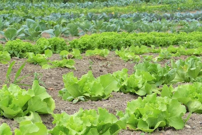 konsep pertanian ramah lingkungan