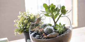 terarium kaktus