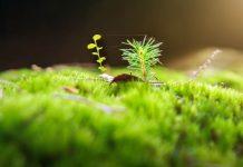 Cara menanam moss