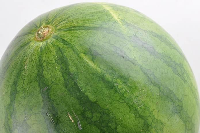 menanam semangka