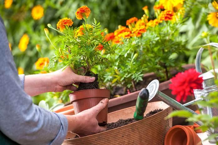 tips merawat tanaman hias