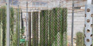 Bertanam vertikultur paralon