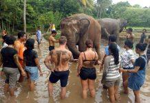 mandi lumpur bersama gajah