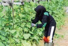 wirausaha muda pertanian Indonesia
