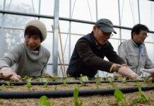 Pertanian modern di Jepang