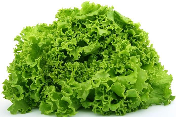 sayuran berdaun
