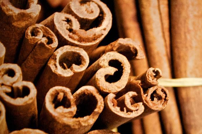 budidaya tanaman kayu manis