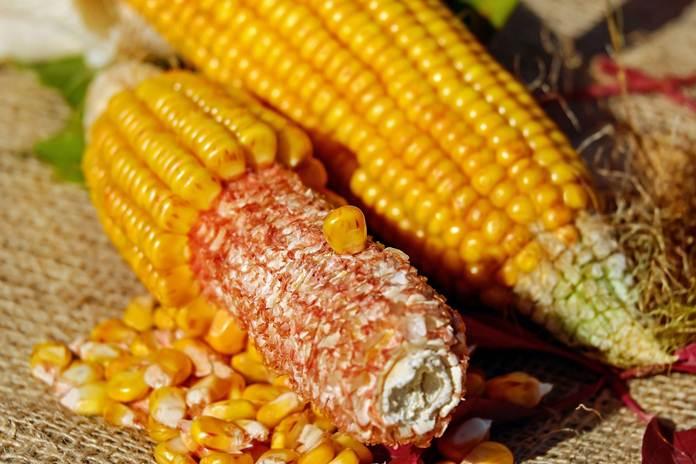 impor jagung tahap kedua