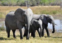 rumah sakit khusus gajah