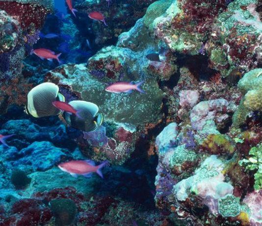 kerusakan terumbu karang