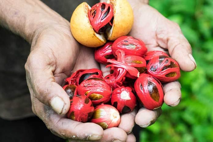 kejayaan pala asli Kepulauan Banda