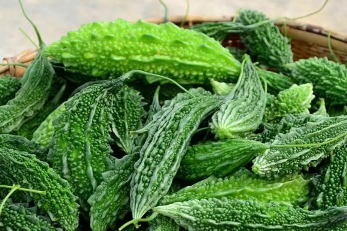 membudidayakan tanaman pare secara organik
