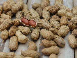 jenis kacang