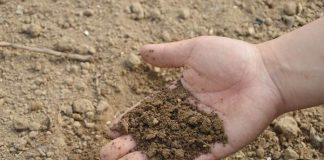 cara mengetahui tanah masam