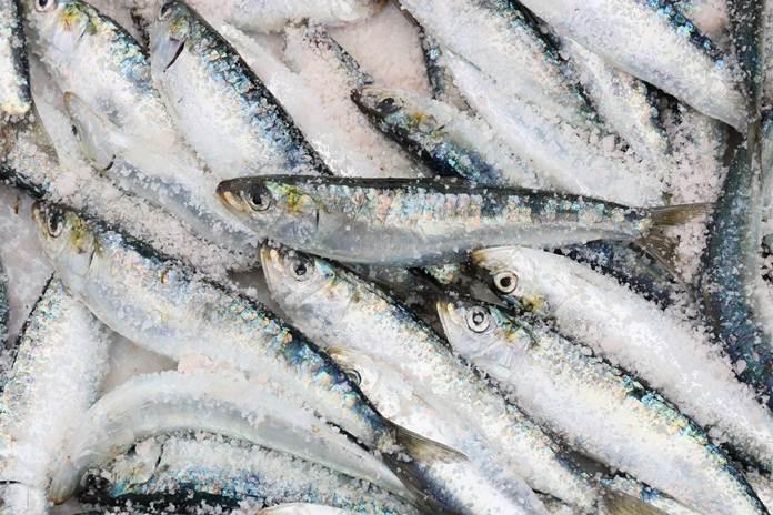 sumber omega-3