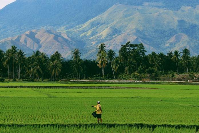 petani milenial