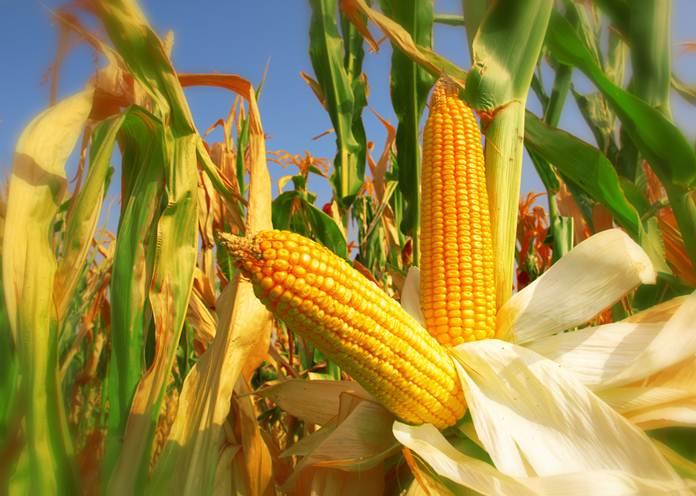 inflasi di sektor pertanian