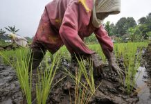 PDB sektor pertanian