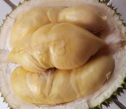 durian boyo pekalongan