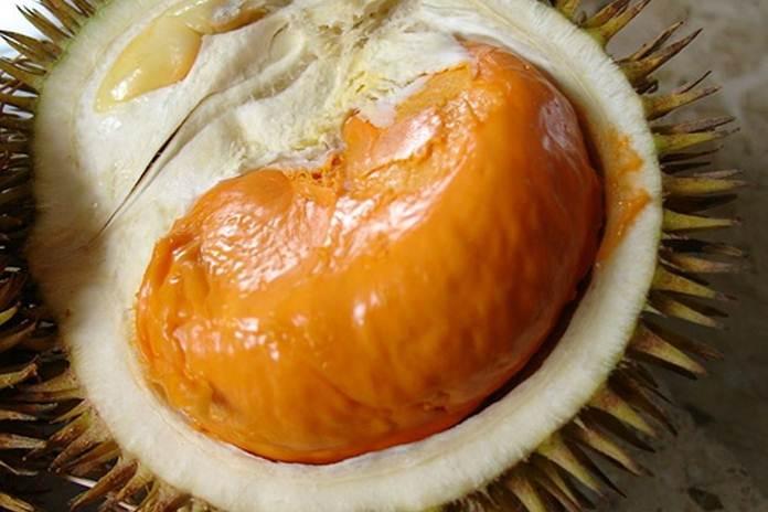 durian Super Tembaga