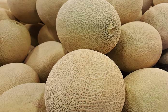 jagung dan melon